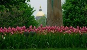 Tulips_and_Dome_at_Notre_Dame